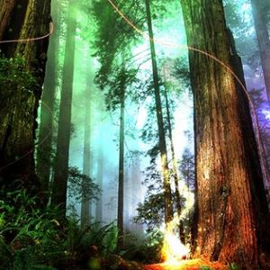 Forest-Vibes 2 Lysergic-Vibes Mix 09/04/2013