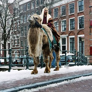 The Camels - The ADEsso-solobombe-adAmsterdam