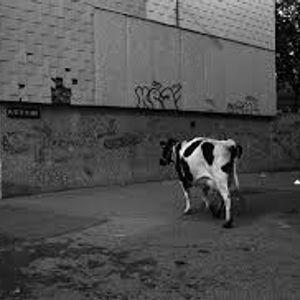 Téma la vache!