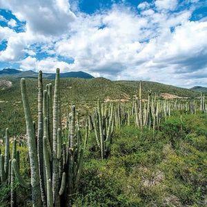 Valle de Tehuacán-Cuicatlán. Hábitat originario de Mesoamérica