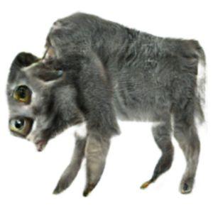Kubshow #50: Minnesota Ibiza Buffalo Buffalo Buffalo (with Amanda und Sarah)
