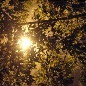 Herbstwind|2005