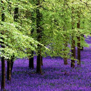 Ment presents April Trees