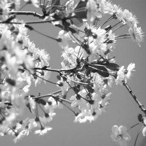 egor kuchepatov - spring touch [FLAT.FM podcast]