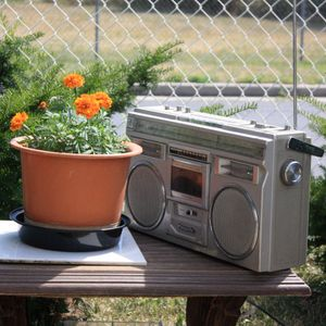 Yummy Sun and Funky Music for Plants