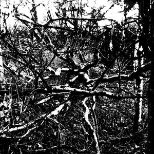 Concrete/Field Remixesmixed