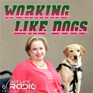 Working Like Dogs - Episode 119 The Top Dog is Back in the House!