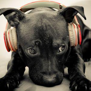 DoggyLife-Reggae Tek