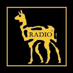 Basses Fréquences _ Podcast n°1