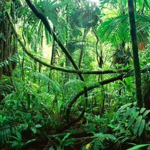 St. Grove - Jungle session