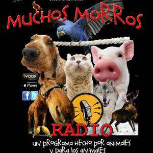 124.MUCHOS MORROS RADIO- Xabier Vázquez : La realidad de los incendios de Galicia. Nacho MArvá: Tors