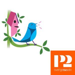Grönsångaren, P2-fågeln