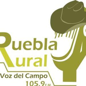 Puebla Rural: Lombricomposta I