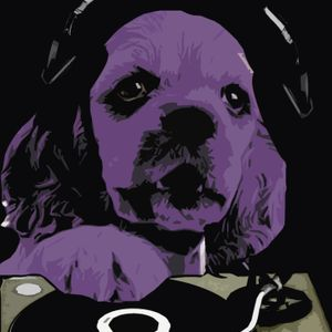 purple dog - it's all about house