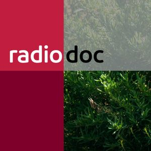 Radio Doc: De levensader van Pierre Courbois | 08-01-2017