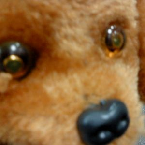 yettken - october 2011 'Foxy'