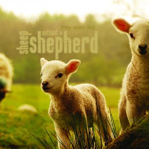 Shepherd - Frühshoppen