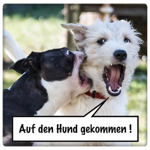 AdHg 076 - Gespräch mit einer blinden Hundehalterin