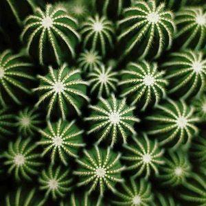 Radio cactus épisode 4