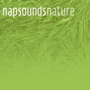 Nature Power Nap Wed, Nov 16 2016