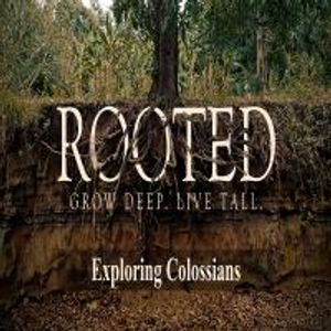 Rooted Pt: 6