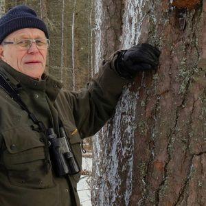 Pekka Helo tuntee Kainuun metsät