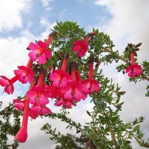 Ep. 143 - Botanizing in Bolivia