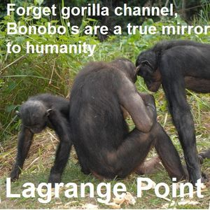 Episode 256 - Learning from primates about human culture