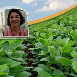 Tendências climáticas para o desenvolvimento da soja no leste de MT são melhores que as verificadas