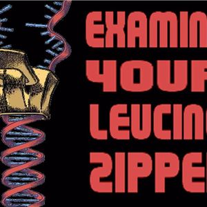 'EXAMINE YOUR LEUCINE ZIPPER' - February 21, 2017