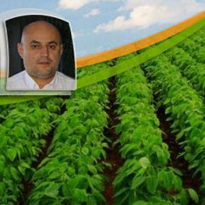 Na região de Jataí (GO), colheita da soja chega a 40% e produtores seguem atentos aos preços