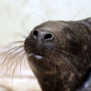 RTU taps akustiskās sistēmas roņu aizbaidīšanai