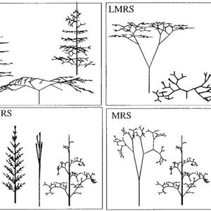 Ep. 119 - Plant Architecture