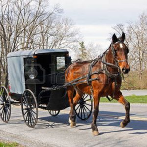 Uber Horse & Buggy