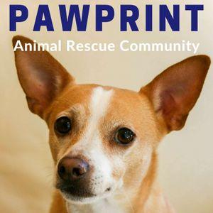 138: Bay Area Pet Fair, Saturday, September 16, morning