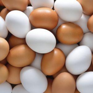 Putni, olas, klusums, divriteņi un svētki