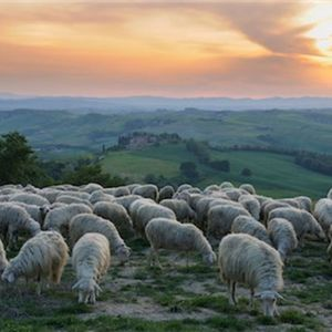 My Shepherd - Messages from Psalm 23 - Part 5