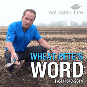 Wheat Pete's Word, June 28: Extreme hail, what's happening to nitrogen, and beautiful barley(!)