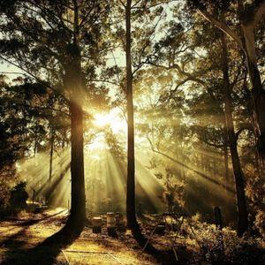 Fruit of the Spirit - Part 10 - Self Control - Audio
