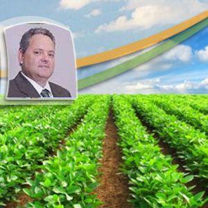 Safra 2017/18: Em Maracaju (MS), plantio da soja chega a 25% e segue atrasado