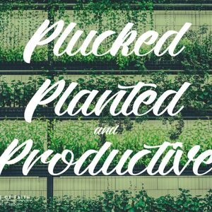 Ps Ian Slack | Plucked, Planted & Productive