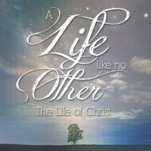 A Life Like No Other week three