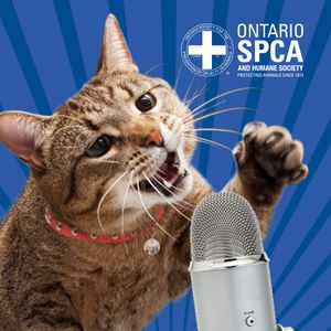 Ticks are expanding in Ontario - Are you prepared? - Animals' Voice Pawdcast - Season 6, Episode 18