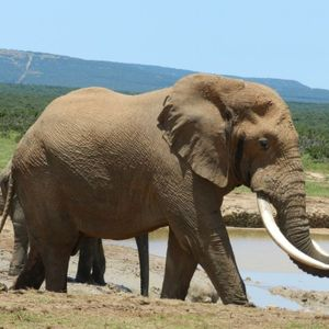 """""""Who is Mr. ELEPHANT?"""" – Homily by Fr. Jerome"""