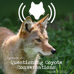 Episode 432: Questioning Coyote Conversations