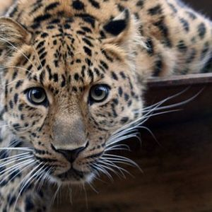 Can a leopard change its spots? New research challenges traditional notions of personality
