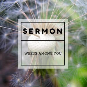 Weeds Among You