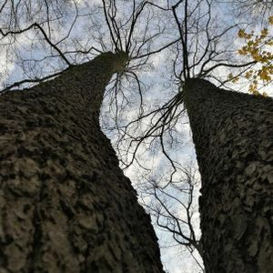 If we could talk to trees