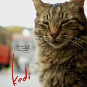 Episode 136: Kedi