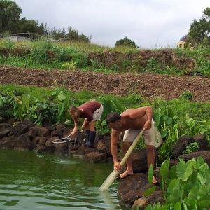 Episode 64 Eddy Garcia Styrofoam Eating Mealworms And Healing Hawaii